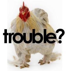Chicken Trouble