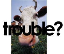 trouble cow